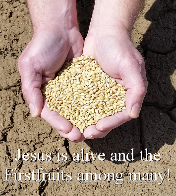 Jesus is alive and the Firstfruits among many!